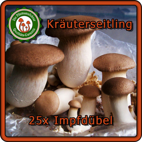 leuchtpilze z chten 20 impfd bel panellus stipticus glowing fungi pilzbrut ebay. Black Bedroom Furniture Sets. Home Design Ideas