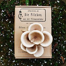 Austernpilze_zuechten_Pilzbox_Pilzzuchtset_Fertigkultur_Austernseitling_DikarBIOn_Pilzzucht_Die_Pilzmanufaktur_ecke_250.jpg