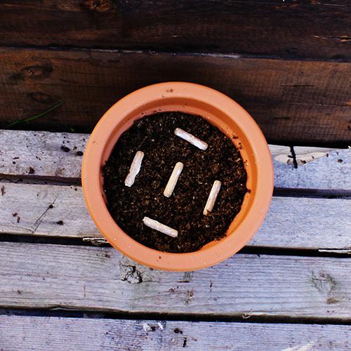 pilze auf kaffeesatz z chten kaffeesatz recyceln dikarbion. Black Bedroom Furniture Sets. Home Design Ideas